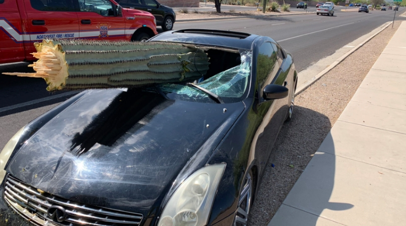Driver Miraculously Unharmed After Cactus Crashes Through Car Windshield