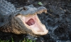 Hey Alabama, Stop Flushing Drugs Down The Toilet Unless You Want 'Meth-Gators'