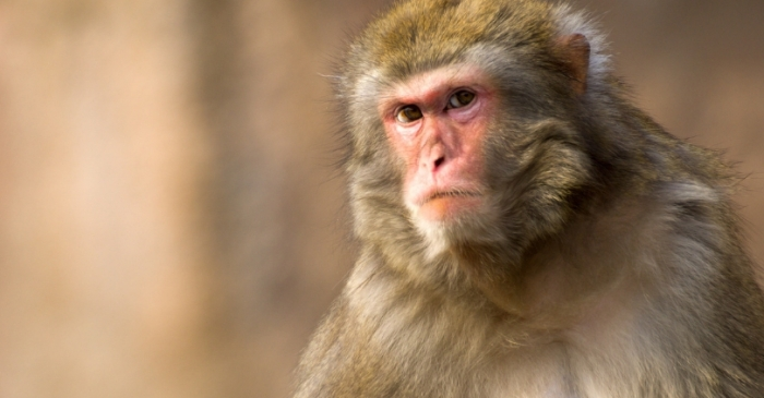 Scientists Have Reportedly Created a Human-Monkey Hybrid in China