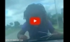 Video Shows Parent Driving With Child on Hood as Punishment