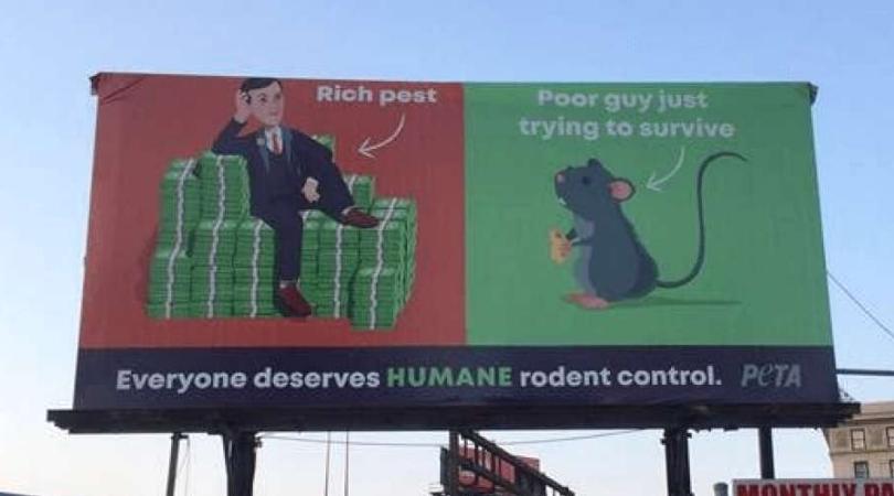PETA Billboard in Baltimore Calls Jared Kushner a 'Rich Pest'
