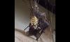 Spider Eating Bat