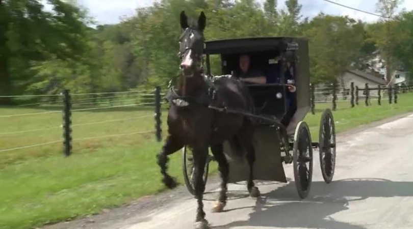Cops Pull Over Two Men on Amish Buggy Drinking Spiked Iced Tea