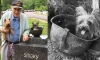 Smoky The Yorkie: The Tiniest World War II Hero Who Saved 250 US Soldiers