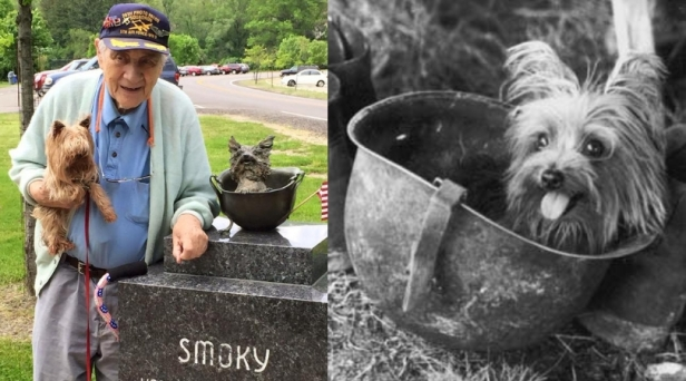 How A Tiny Yorkshire Terrier Saved 250 US Soldiers During World War II