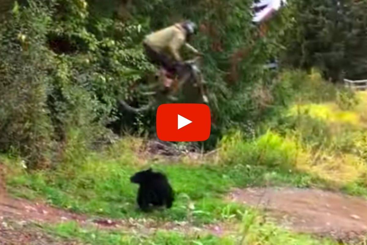 Mountain Biker Jumps Black Bear, Invents Glorious New X Games Sport