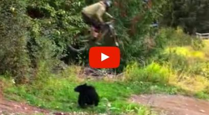 Mountain Biker Jumps Black Bear, Invents Glorious New X Games Sport