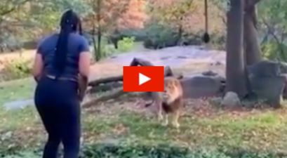 Woman Jumps into Cage for Bold Standoff with Lion