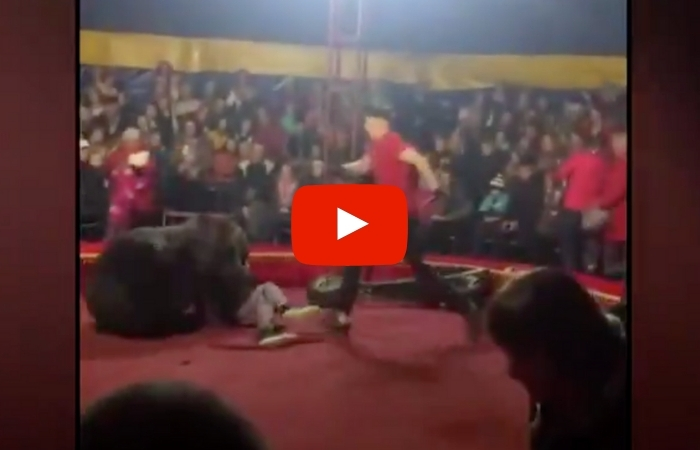 Circus Bear Goes Nuts, Mauls Trainer as Kids Look on in Terror