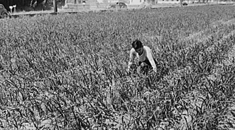 Bob Fletcher: The Hero Who Stood Up For Japanese-American Farmers During WWII