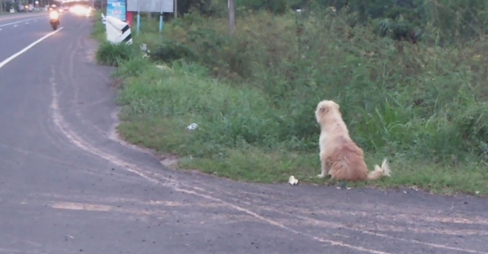 Abandoned Pup Waits on Roadside for 4 Years After Falling from Owners Truck