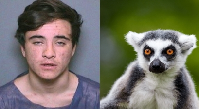 Teenager Who Stole Lemur from Zoo Given Three Months in Prison