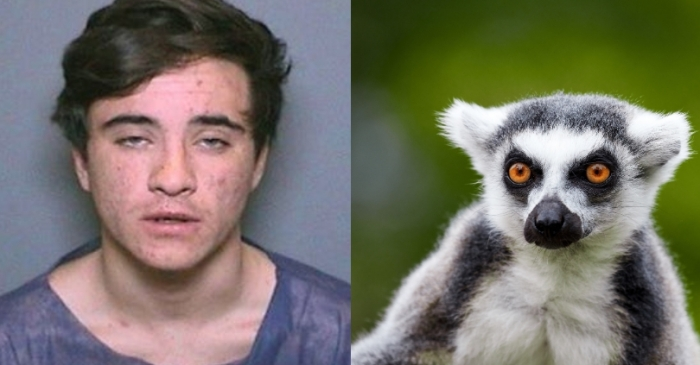 Teenager Steals Lemur from Zoo, Gets Three Months in Prison