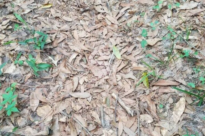 Can You Find the Snake Hiding in Plain Sight in This Photo?