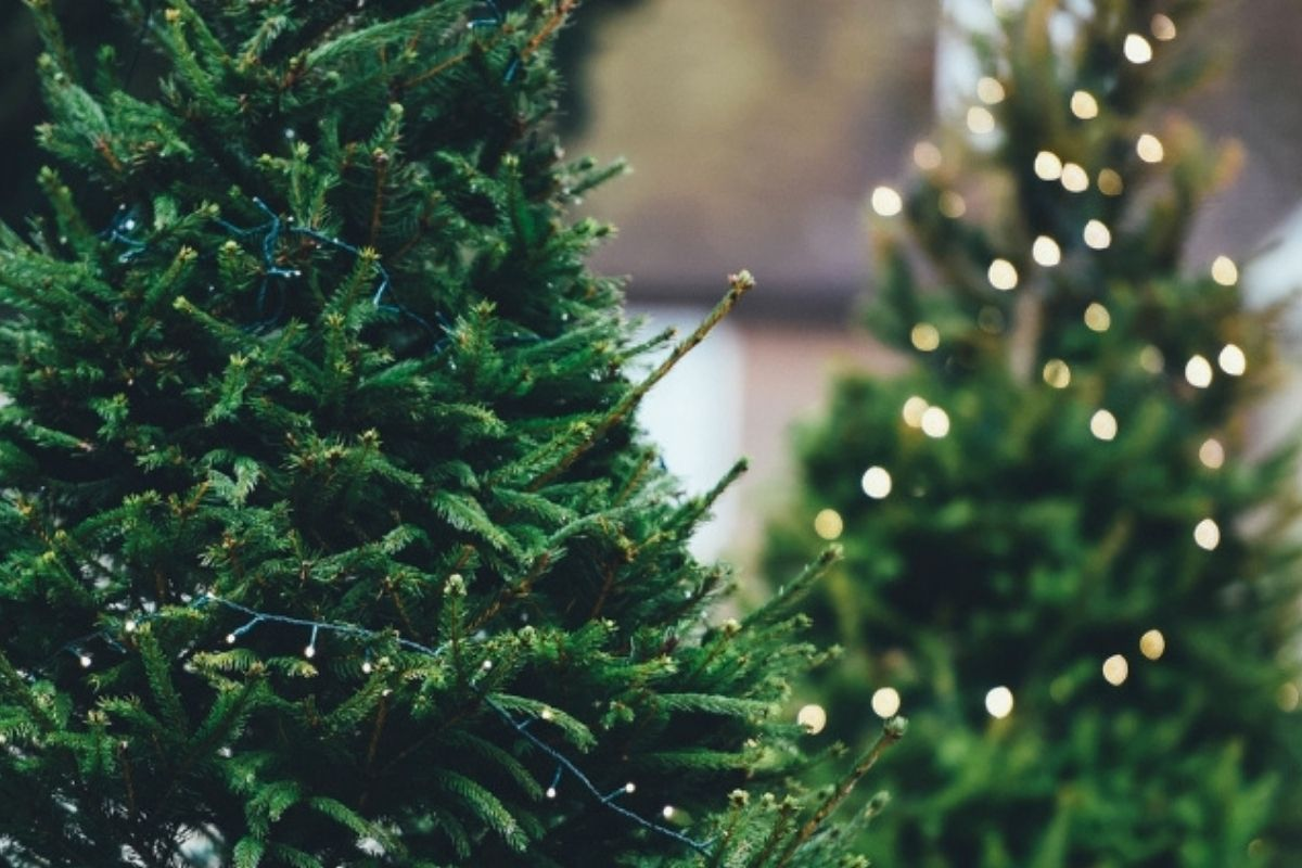 Yes, Christmas Tree Bugs Exist! Here Is How To Get Rid Of Them!