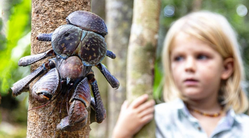 The Giant Coconut Crab Can Devour a Whole Bird in Minutes!