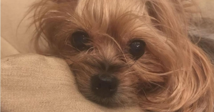 Dog Crushed to Death After FedEx Worker Tossed Package Over Fence