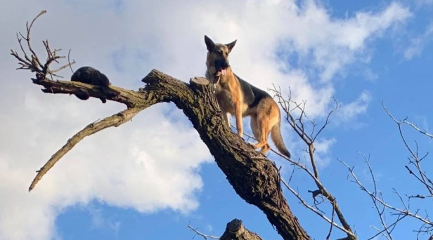 Firefighters Called to Get DOG Out of Tree After it Chased Cat Up There