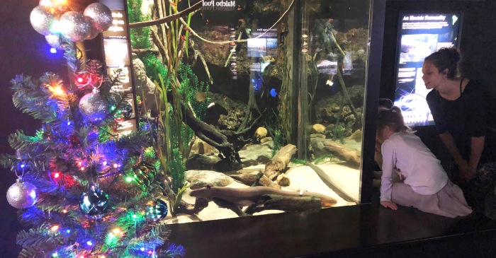 An Electric Eel is Powering This Aquarium's Christmas Tree