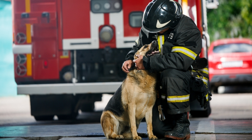 Dog Accidentally Starts House Fire by Switching on Microwave