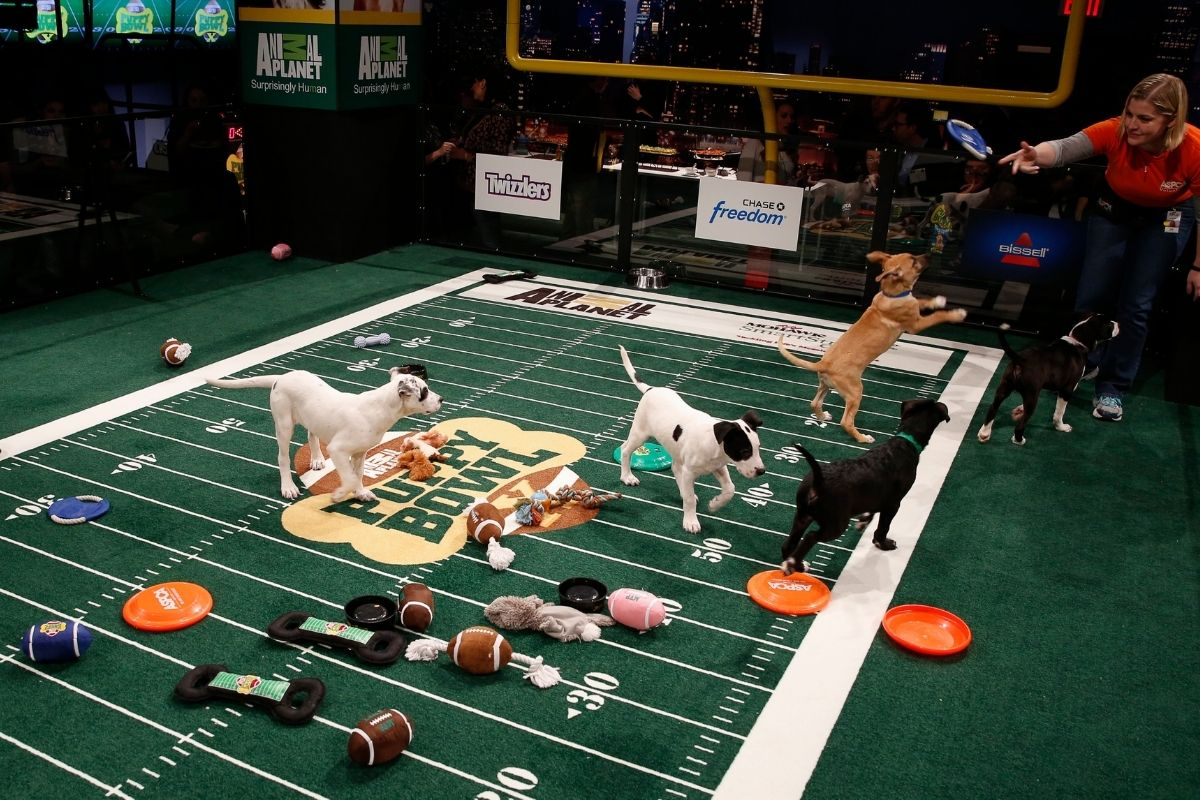 Puppy Bowl XVII: Meet the Real Stars of Super Bowl Sunday