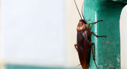This Zoo Will Name A Cockroach After Your Ex for Valentine's Day, Because They Deserve It