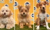 Puppy Bowl XVI: Meet the Real Stars of Super Bowl Sunday