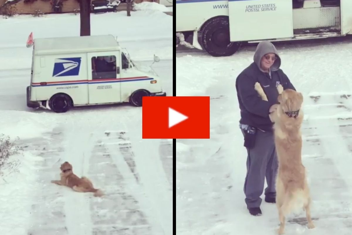 Adorable Dog Waits Everyday to Get a Hug From Mailman