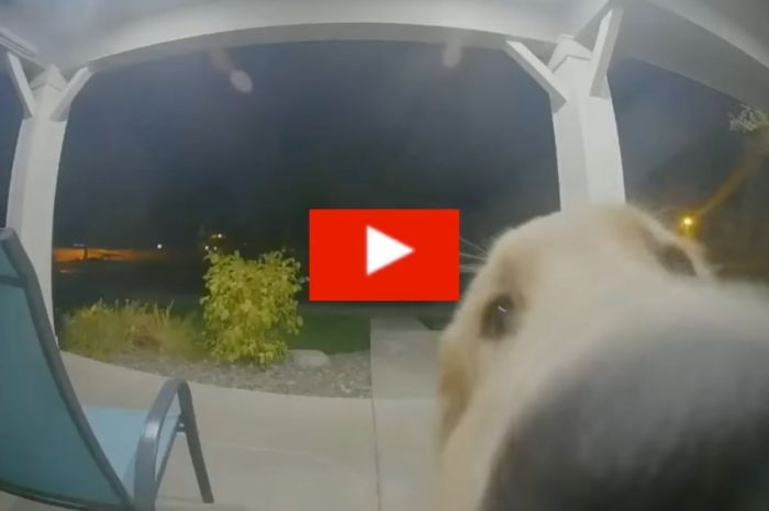 Escaped Dog Rings Doorbell to Get Back In
