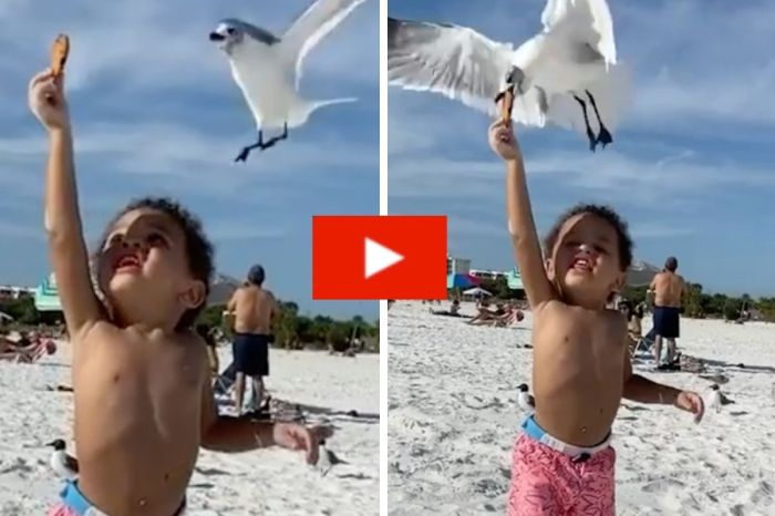 Adorable Toddler Has Cookie Stolen by Heartless Seagull