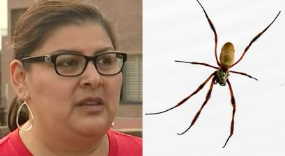 Doctors Found Brown Recluse Spider Living in Woman's Ear