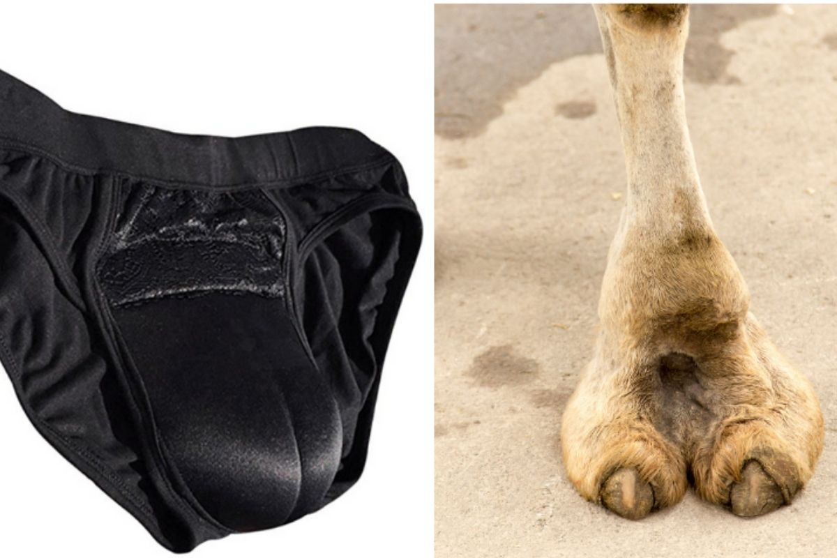 Fake Camel Toe Underwear is One of the Weirdest Fashion Trends Ever
