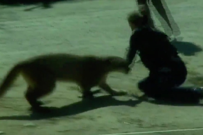 Deputy Fights Off Mountain Lion with Bare Hands