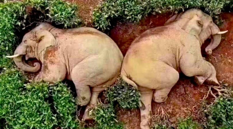 Drunk Elephants China