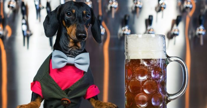 Busch to Offer 3 Months of Free Beer to Those Who Adopt a Dog During Pandemic