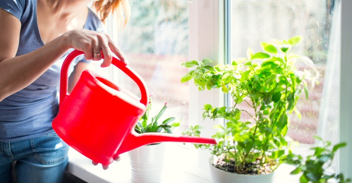 People Are Fertilizing Their House Plants with Period Blood