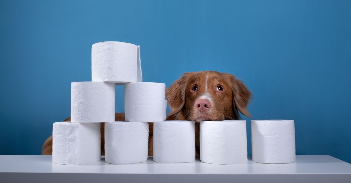 Puppies Rule the Trending Toilet Paper Challenge