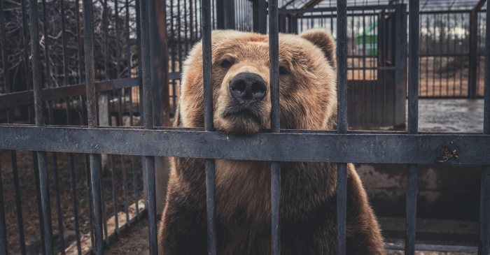 Struggling Zoo Says it Might Have to Start Feeding the Animals to Each Other