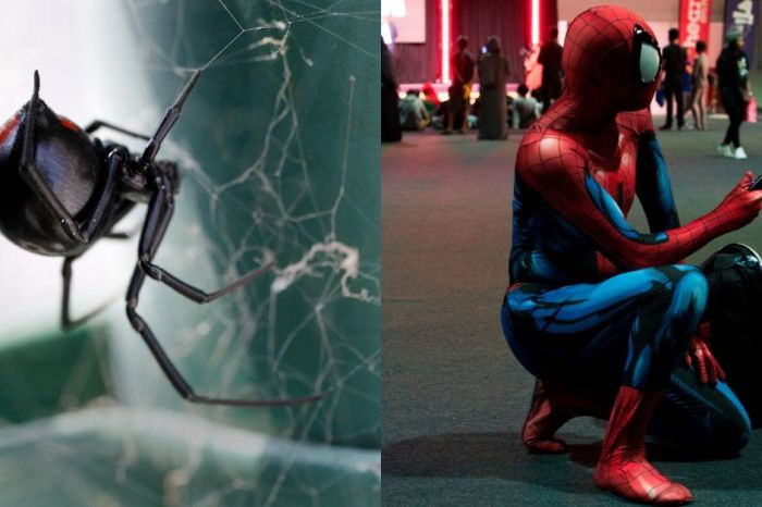Brothers Force Black Widow Spider to Bite Them To Become Like Spider-Man