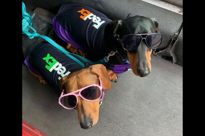Fedex Driver Takes Adorable Dressed-Up Pups with Him on His Delivery Route