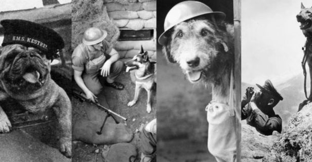 A Tribute to All the Heroic Dogs of WWII