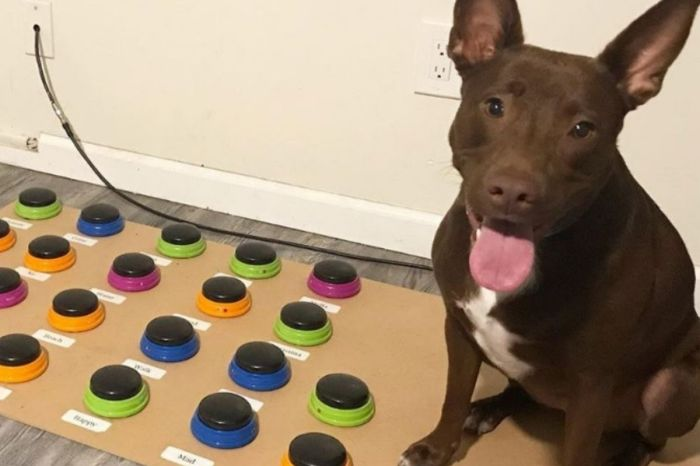 The Woman is Teaching Her Dog to Speak in the Most Creative Way