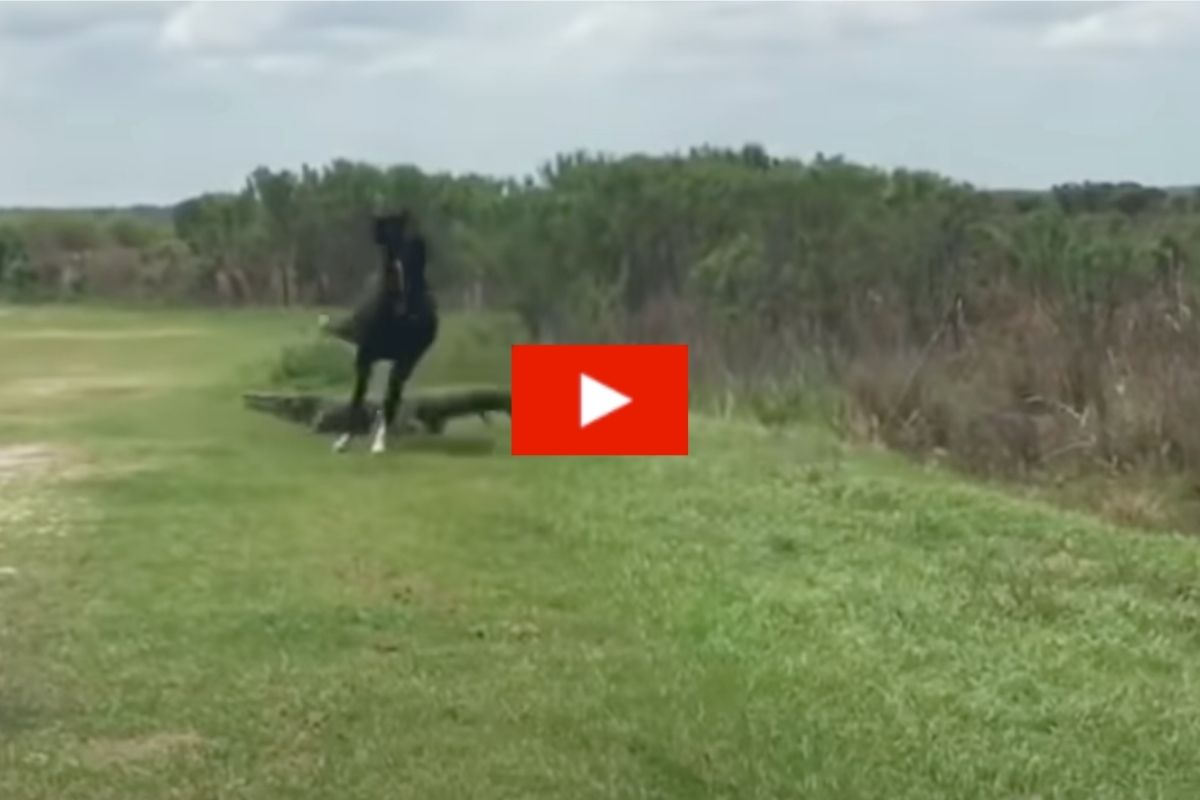 Wild Horse Aggressively Curb Stomps Alligator at Florida State Park