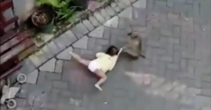 Scooter Riding Wild Monkey Caught on Video Dragging Helpless Toddler Away from Parent