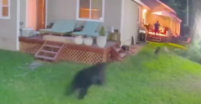 Bear Charges Down Woman and Dogs in Their Own Backyard