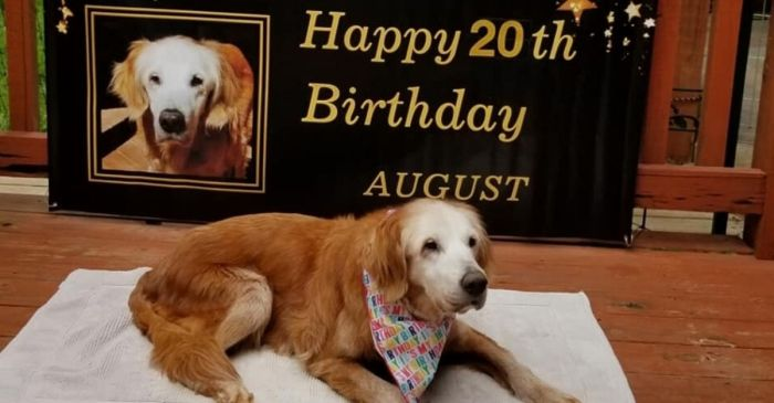 20-Year-Old Dog Sets Record for Oldest Living Golden Retriever in History