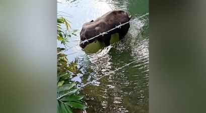 Pregnant Elephant Dies After Being Fed Fruit With Firecrackers Hidden Inside of Them