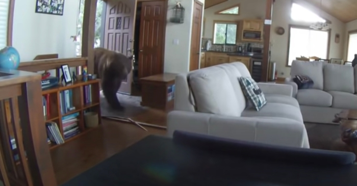 Home Security Camera Shows Huge Bear Kick Front Door Open, Enter Home
