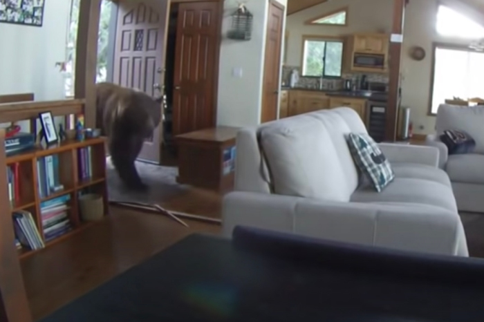 Home Security Camera Shows Huge Bear Kick Front Door Open, Enter Home