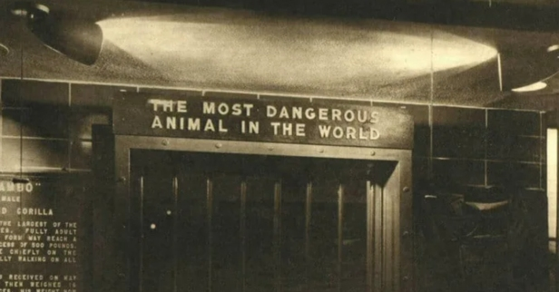 "In 1963, the Bronx Zoo Had an Exhibit Called ""The Most Dangerous Animal in the World"""